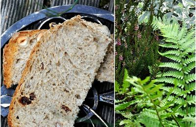 Pain de campagne aux graines Up, raisins secs et noisettes