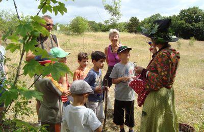 25 juillet 2016:  Balade à la découverte des plantes sauvages comestibles