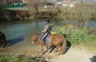 Trois poneys des Pyrénées .