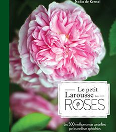 Les plus belles roses selon Nadia de Kermel - Chantilly