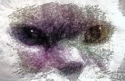 regard de chat 3