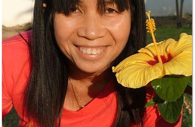 Les fleurs d'hibiscus....