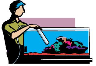 Hiring Fish Tank Maintenance Service Is Not A Bad Idea?