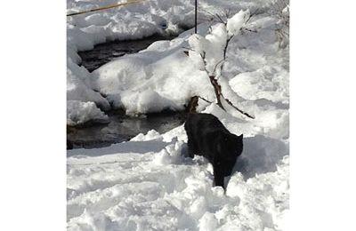 Croquis sur la neige