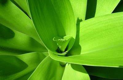 Vert couleur