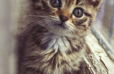 Chaton - Picture - Free