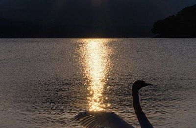 Nature - Cygne - Soleil - Montagnes - Lac - Picture - Free