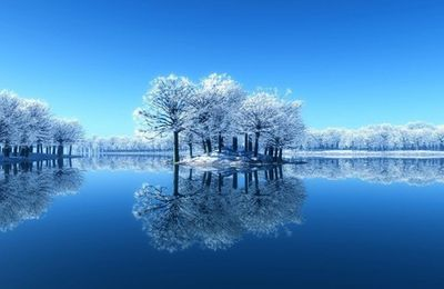 Arbres - Nature - Neige - Hiver - Picture - Free