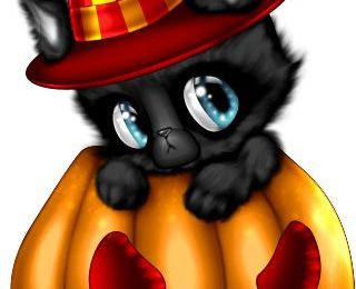 Chat - Citrouille - Halloween - Picture - Free