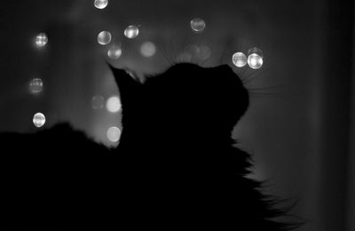 Chat - Ombre - Nuit - Wallpaper - HD - Free