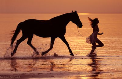 Femme - Cheval - Mer - Picture - Free