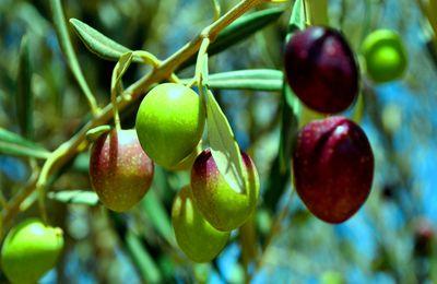 Les différentes façons de préparer les olives