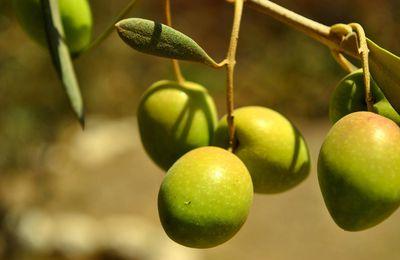 Vertus des olives