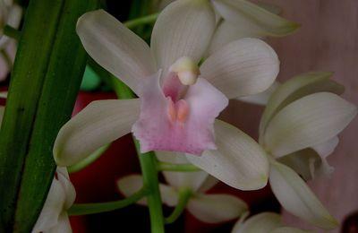 Un jour une fleur, un espoir pour la vie