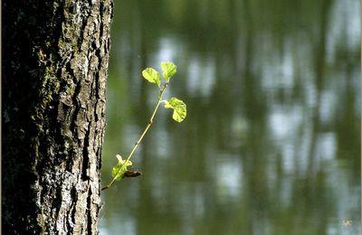 Tronc d'arbre...