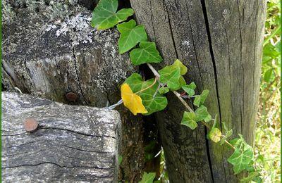 Végétation contre du bois...