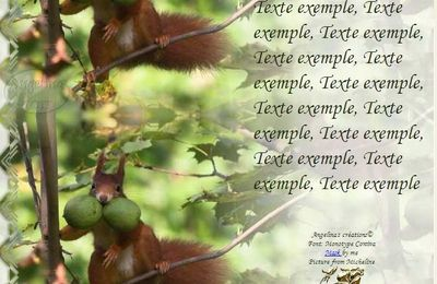 Ecureuil avec noix Incredimail & Papier A4 h l & outlook & enveloppe & 2 cartes A5 & signets 3 langues    an_ecureuil_micheline_ecureuils_20110225_00