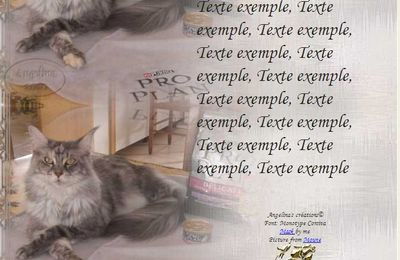 Maine Coon faisant la pub IM & Papier A4 h l & outlook & enveloppe & 2 cartes A5 & signets 3 langues     chat_mainecoon_moune_cimg0804_00