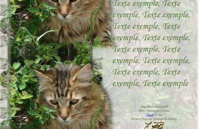 Maine Coon Incredimail & Papier A4 h l & outlook & enveloppe & 2 cartes A5 & signets 3 langues     chat_mainecoon_daisy_gedc0335_00