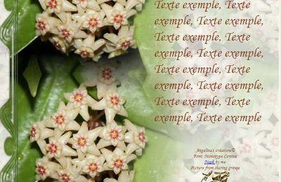 Hoya Limoniaca Incredimail & Papier A4 h l & outlook & enveloppe & 2 cartes A5 & signets 3 langues + hoyaaddicted hoya_limoniaca_00