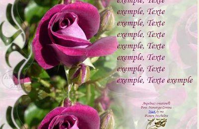 Rose violette Incredimail & Papier A4 h l & outlook & enveloppe & 2 cartes A5 & signets 3 langues     rose_violette_00_micheline