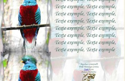 Quetzal Incredimail & Papier A4 h l & outlook & enveloppe & 2 cartes A5 & signets 3 langues     ois_quetzal6_00_micheline