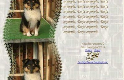 Colley Sheltie bébé Incredimail & Papier A4 h l & outlook & enveloppe & 2 cartes A5 & signets 3 langues     chien_colley_sheltie_emma_069