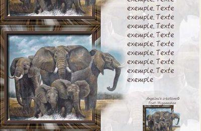 Eléphants sortant du cadre IM & Papier A4 h l & outlook & enveloppe & 2 cartes A5 & signets 3 langues     ele_large_sortant_du_cadre