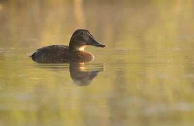 Sur l'étang (suite)