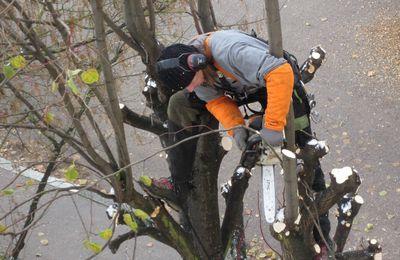 Misterbricolo se lance dans l'abattage d'arbre ...