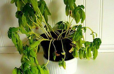 Misterbricolo : air humide, plante heureuse...