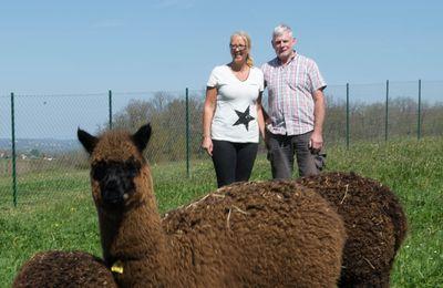 Fumélois : Tremons, des Alpagas au bord du Lot !!!