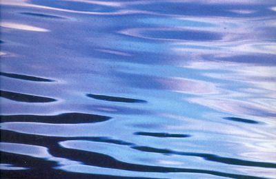 Variations aquatiques autour du bassin d'Arcachon