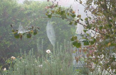 Une oeuvre d'art : une toile d'araignée dans la rosée et la brume du matin