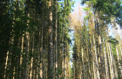 Dans la forêt d'Othe : Cabaret : Kinou l'enfant du ciel