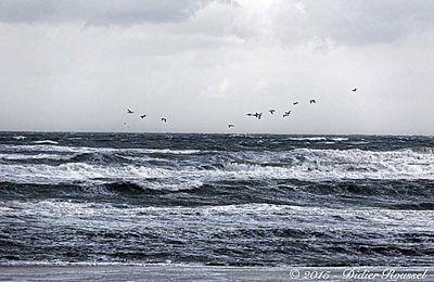 Mer du Nord en hiver