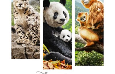 NES EN CHINE, film DISNEYNATURE