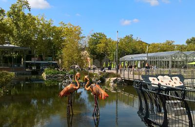 Des flamants roses à La Roche !
