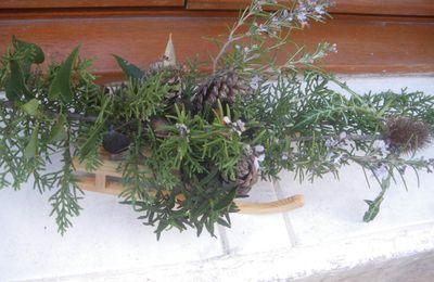 Romarin en fleurs à noël