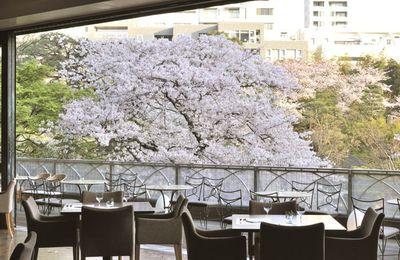 Les sakura de Tokyo