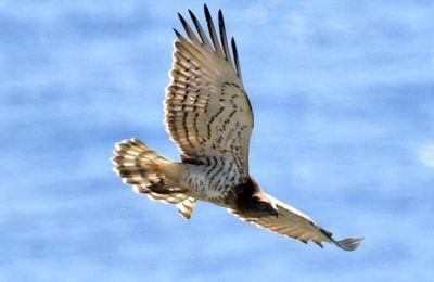 Ouest Var/La Seyne : Parcours d'Identification des oiseaux avec la Ligue de protection des Oiseaux (LPO)