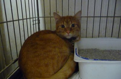 Il est adopté !!!! : COOKIE - très jeune mâle castré de 11 mois