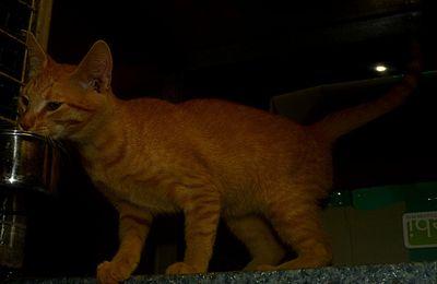 Il est adopté !!! : GWINFOR - adorable petit mâle castré de 4 mois 1/2