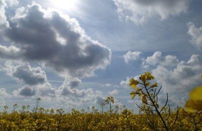 Mortalité de bourdons sur le colza, les amandiers et le sable, avec ou sans pesticides ?