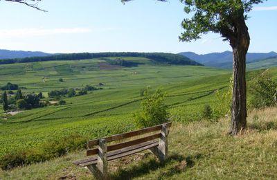 banc dans le vignoble alsacien (communauté LES BANCS D'ICI ET D'AILLEURS)