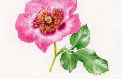 Fleurs printanières à la Sédelle