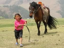 Vers Lamotte - Horse ball