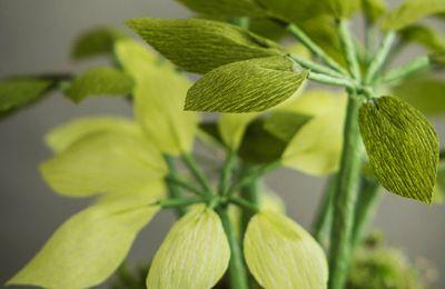 Une nouvelle plante en papier crépon