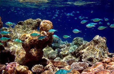 Eau : Le monde sous-marin