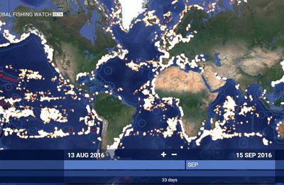 Global Fishing Watch, un site pour traquer la surpêche, en direct